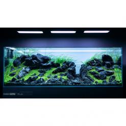 Black Seiryu Rock Aquascape