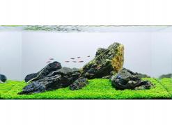 Seiryu Rock Aquascape