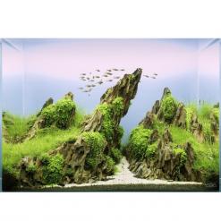 Dragon Rock Aquascape