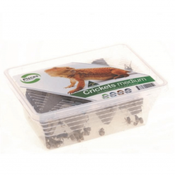 Live Crickets - Medium - Pisces