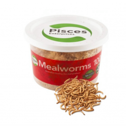 Mealworms - 10g - Pisces