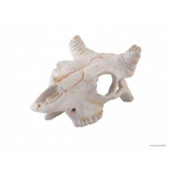 Exo Terra Buffalo Skull Small