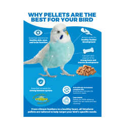 Why Pellets Are The Best For Your Bird