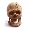 Aqua One Human Skull with Hole 13.5 x 9.5 x 13cm