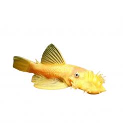 Catfish - Live