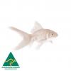 3.5-5cm Goldfish Feeders